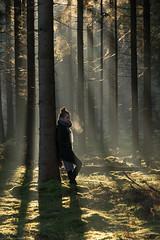 (CarolienCadoni..) Tags: sonyslta99 sal70200g2 70200mmf28gssmii sony trees tree forest rays raysoflight light sun boomkroonpad drouwen drenthe