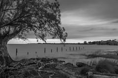 _MG_6871 (norberto.endo) Tags: puntaindio riodelaplata rio blancoynegro blackwhite longexposure