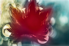 L'ultima foglia balla da sola (bresciano.carla) Tags: pentax helios pentaxk500 helios442258 red vintage manuallens flickr bokeh color leaf autumn light oldlenses russianlens m42 nature