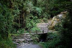 De camino a Gorepani (Sitoo) Tags: annapurna annapurnabasecamp bridge campobaseannapurna himalaya jungle nature nepal stream togorepani trek trekking woods stairs 40mm