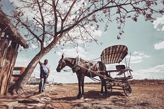 Private Investigations (u c c r o w) Tags: urban urbanlife horse matanzas cuba cuban horsecarriage carriage uccrow