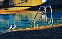 Deauville (o.penet) Tags: deauville normandy nature sand mouettes piscines couleurs swimming pool