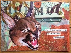 Not in my kitchen (witt0071) Tags: postcard cougar mailart kitchen mixedmedia napkin russia map tissuepaper cat swapbot waar