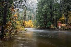Yosemite High Water (Kirk Lougheed) Tags: california mercedriver usa unitedstates yosemite yosemitenationalpark yosemitevalley autumn bank fall forest landscape nationalpark outdoor river water