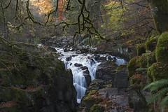 Autumn Falls (kenimcg107341) Tags: scotland highlands waterfall autumn colours trees moss rocks gorge nikon d750 1635