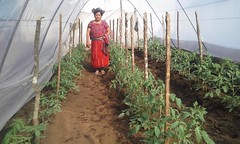 2016 Catalina (Foods Resource Bank) Tags: foods resource bank food security income humanitarian guatemala indigenous women agriculture children greenhouses small business