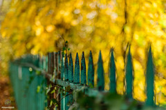 Fence-keh (w.mekwi photography [here & there]) Tags: bokeh greenfence 50mmf14 dof hff niftyfifty wmekwiphotography yellow nikond800 maxwellpark