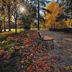 (383/16) Otoo en le Retiro (Pablo Arias) Tags: pabloarias photoshop nxd cielo texturas espaa rbol parque hojas otoo elretiro madrid comunidaddemadrid