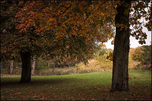 Autumn Impressions III |  Schleswig