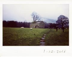 Thursday 1st December (ronet) Tags: fuji thursdaywalk winter barn edale field fog footpath instantfilm instax instax200wide path people sheep utata utata:project=tw554