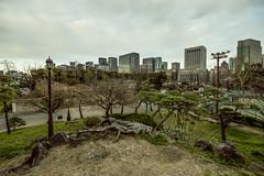 Tokyo Park (*JRFoto*) Tags: jrfoto d750 nikon tokyo japan asia park little green lung midst city trees nature towering bulidings scape og this big metropolis