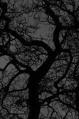 Twisted Tree (DanRNeumann) Tags: southbend indiana twisted tree dark tmt