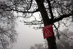 Kinder! im Nebel (Petra Kaap Photography) Tags: minolta auto wrokkorhg 128 35mm nebel fog warnschild kinder bume tree children