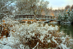 Winter Scene (CCphotoworks) Tags: ccphotoworks newmarket fairylake lake water bridge outdoors nature cold snow landscape scenics winter