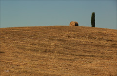 One of the many beautiful fragments of the Tuscan landscape (Frank//) Tags: italy topf25 canon landscape topf50 topf75 europe unesco tuscany pienza toscana valdorcia topf150 topf100 unescoworldheritage whs 70200mm nextime 127mm orvil poderebelvedere watmooi mrtungsten62 frankvandongen