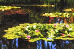 Chez Monet (blichb) Tags: france garden frankreich waterlily monet normandie garten giverny lilypond seerose monetsgarden seerosenteich nympha hautenormandie 2013 canon6d monetsgarten blichb