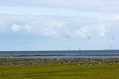 _20.08.2013-14.55.43.jpg (Heizfeiz) Tags: island northsea lucht nordsee pellworm northernsea nordseeinsel