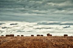 Denmark Fields
