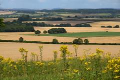 Hampshire landscape (Rich3012) Tags: uk summer england landscape britain hampshire farmland fields late hdr hants
