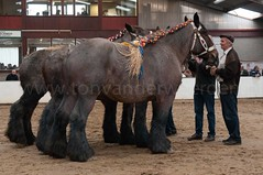 DSC_6723 (Ton van der Weerden) Tags: horses horse dutch de cheval belgian nederlands belges draft chevaux belgisch trait trekpaard trekpaarden ckcentralekeuringsintoedenrodefokgroepharrievanderheijd ckcentralekeuringsintoedenrodefokgroepharrievanderheijdenvessem