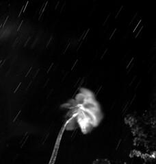 A windy night in Fiji (Amanda Tomlin) Tags: night acros hasselblad503cw