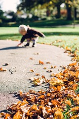 more to find (~jessS~) Tags: autumn light nature leaves toddler natural fallen collecting
