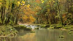 Le paradis des truites (Tonton Dave) Tags: autumn water automne river landscape switzerland eau suisse rivière orbe paysage vaud gorgesdelorbe lesclées