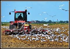 Landwirtschaft / Agriculture - Bodenbearbeitung, Saatbettbereitung und Aussaat (berndwhv) Tags: landwirtschaft agriculture