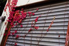 OM131130_45 (minhana87) Tags: autumn tokyo olympus nokton omd 25mm yanaka em5