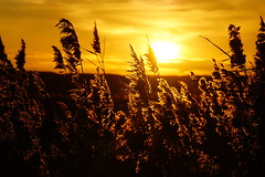 DSC00374 - Bowers Marsh (steve R J) Tags: sunset sky reeds landscape reserve marsh essex bowers rspb