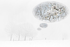 Trume glcklich (Uli He - Fotofee) Tags: schnee winter nikon nebel blte mallorca uli ulrike blten trume traum mandelblte trumen bltentraum nikond80 winterbume schneebume fotofee ulrikehe ulihe