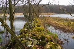 Gärdsgård Rönne å (LisaOlsson) Tags: river skåne stream sweden å sverige gärdsgård stenmur gärdesgård rönneå