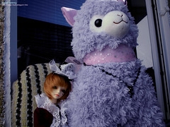 The Prince and his ho... Llama ♥ (angel_vortex) Tags: ball doll llama bjd dz 2014 jointed megi dollzone arpacasso megi4