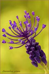 ....in cerca di Orchidee 2 (leon.calmo) Tags: canon fiori pisani monti orchidea eos50d ascianopisano leoncalmo