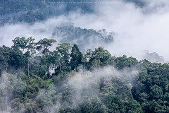 Morning Mist (jiewphoto) Tags: morning light terrain cloud mist mountain tree nature beautiful misty fog forest sunrise landscape thailand outdoors dawn early rainforest asia heaven view background smoke hill foggy scenic atmosphere peak overcast scene location aerial highland valley tropical layer environment exploration region range idyllic far atmospheric slope inspiring freshness