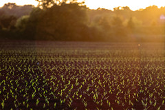 warmth (Kacey_Oesterreich) Tags: pictures sunset summer plants hot green beautiful out for amazing focus warm please pics magic hipster like best l series farmer ever loe followme chec t4i followforfollow