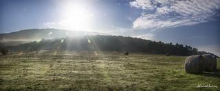 Luz de mañana Pano.-Morning light.Nº41