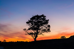 Tree at Sunset (E. Aguedo) Tags: tree bench sunset sky red blue rocky point park warwick rhode island new england ngc