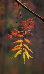 3rd Place!!! (Ginny Williams Photography) Tags: rainbow leaf fall autumn raleigh north carolina fine art photographer printsforsale printsforpurchase northcarolina photography
