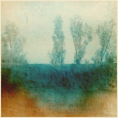 (n k l s) Tags: photo photography trees textured square gimp