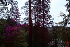 2016 - 14.10.16 Enchanted Forest - Pitlochry (6) (marie137) Tags: enchanted forest pitlochry mobrie137 scotland lights music people water reflection trees shows food fire drink pit patter shapes art abstract night sky tour family walk path bells smoke disco balls unusual whisperer bridge wood colour fun sculpture day amazing spectacular must see landscape faskally shimmer town