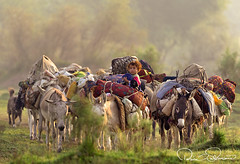 princes of convoy (TARIQ HAMEED SULEMANI) Tags: sulemani supershot sensational tariq tourism trekking tariqhameedsulemani travel shepherd pakistan punjab photography panoramafotográfico panjnad