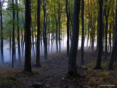The forest in the fall early morning with fog, Kosice, Slovakia (traveltipy.com) Tags: forest les kosice slovakia slovensko vysokyvrch morning autumn fall jesen hmla fog rano