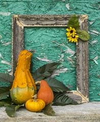 Fall Gords (a56jewell) Tags: a56jewell gords oct shade frame sunflower yellow fall pumpkin