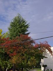 Good Morning from My Window. October 28, 2016 (fukapon) Tags: tweet goodmorningfrommywindow frommywindow 弘前 hirosaki 青森 aomori 645z pentax smc pentaxfa645 75mm f28 smcpfa64575mmf28 sghs