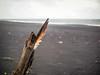 Driftwood and Feather (TheSimonBarrett) Tags: iceland lýðveldið ísland beach vik