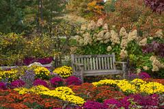Park Bench-2016-1.jpg (scorpio71gr) Tags: colors frederickmeijergardens k3 parkbench pentax tamron7020028