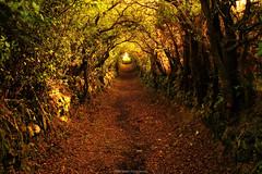 Ballynoe Tree Tunnel (Gerard Joseph Christopher) Tags: ireland irish celtic neolithic ballynoe stone circle sunrise moonset ring tree ancient standing stones hedges tunnel magical tuatha de danann fairy folk druids pagan