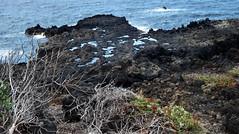 La Palma 22 (megegj)) Tags: gert