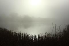 Ivy Lake misty morning (Bob at Blashford) Tags: hampshireisleofwightwildlifetrust hampshire blashfordlakesnaturereserve ivylake lake water mist earlymorningsun reflections reeds trees